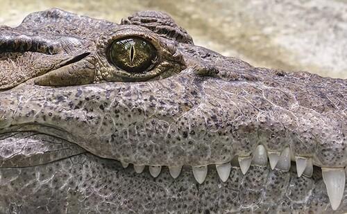 """""""Saltwater"""": la nueva película terror y depredadores basada en hechos reales"""