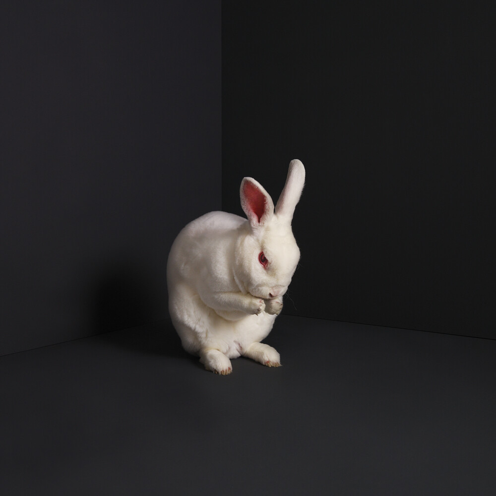 Brume - Rabbits (Solid White Vinyl) (Wht)