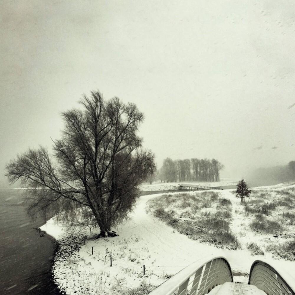 Beequeen - Winter