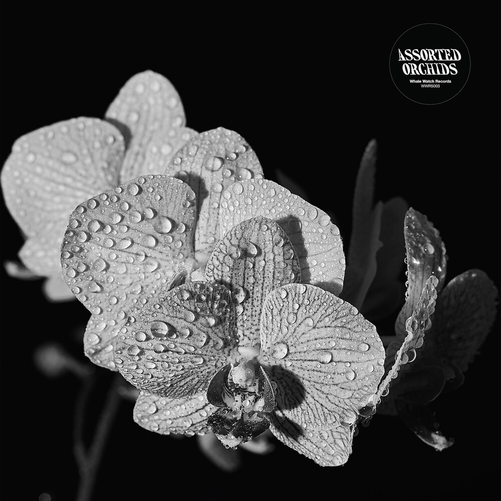- Assorted Orchids