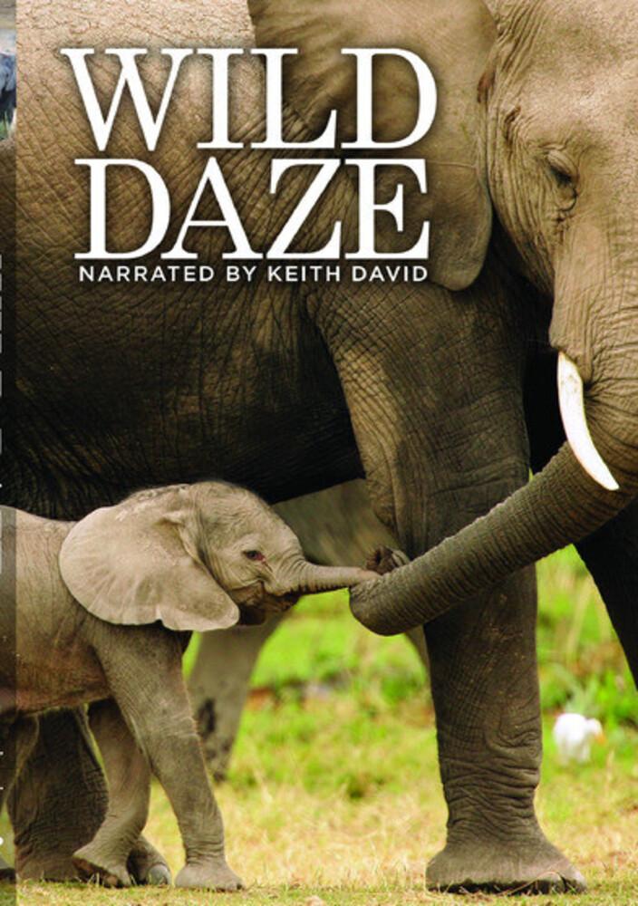 Wild Daze - Wild Daze