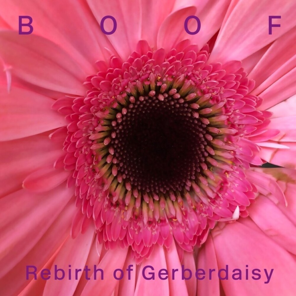 Boof - Rebirth Of Gerberdaisy (2pk)