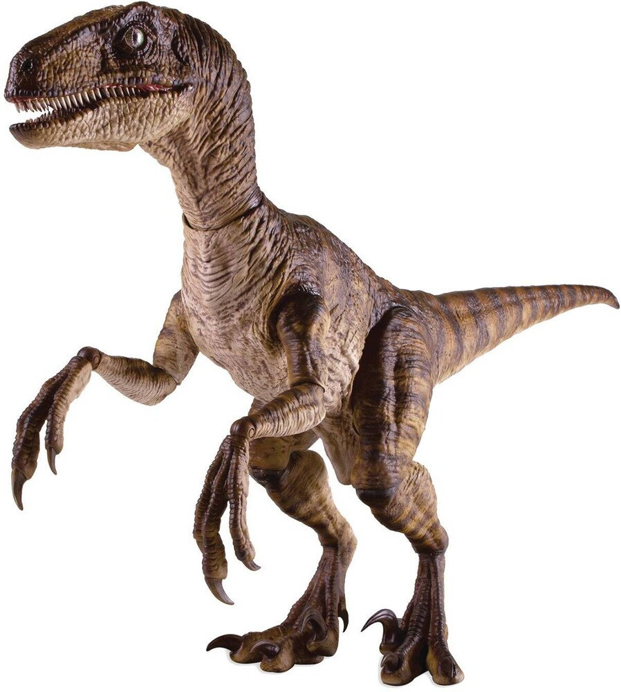 Jurassic Park Velociraptor 1/6 Scale Articulated F - Jurassic Park Velociraptor 1/6 Scale Articulated Fig (Net)