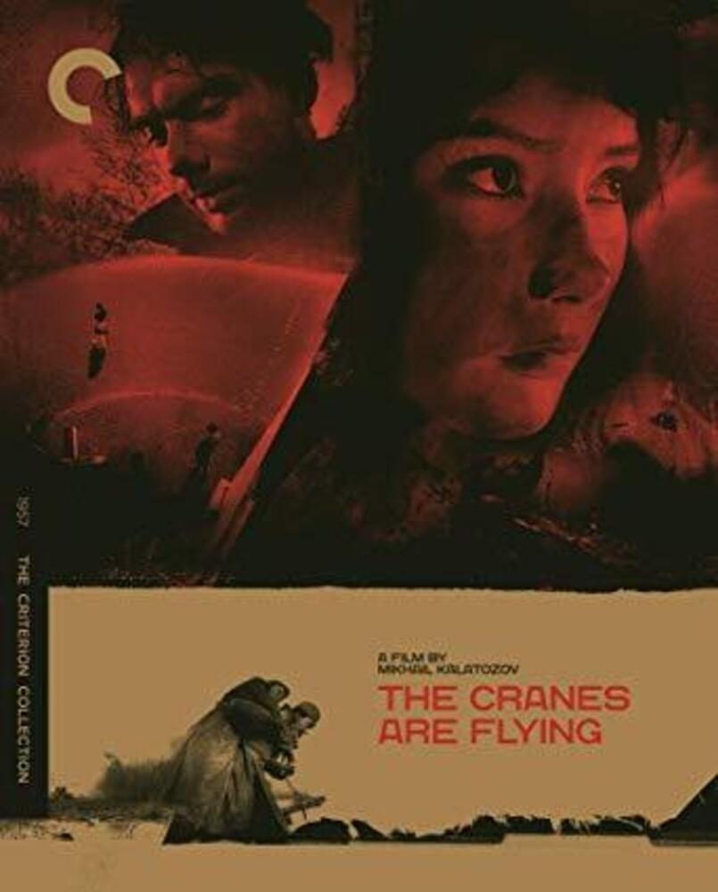 Alexander Shvorin - Criterion Collection: Cranes Are Flying / (Rstr)