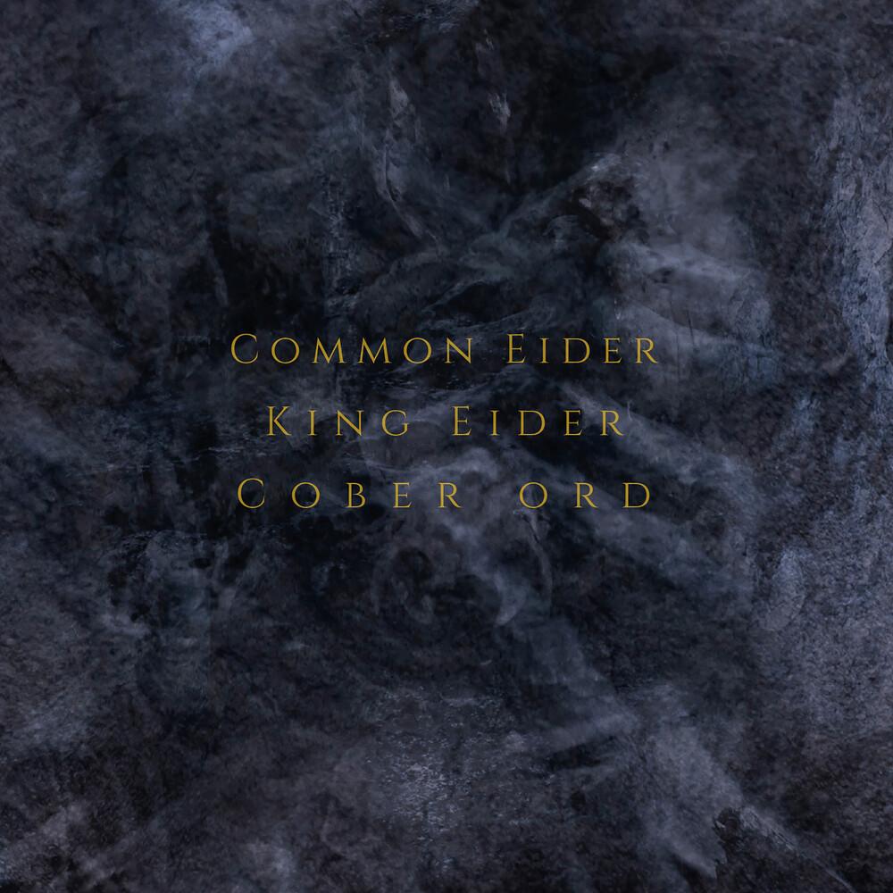 Common Eider / King Eider / Cober Ord - Palimpseste