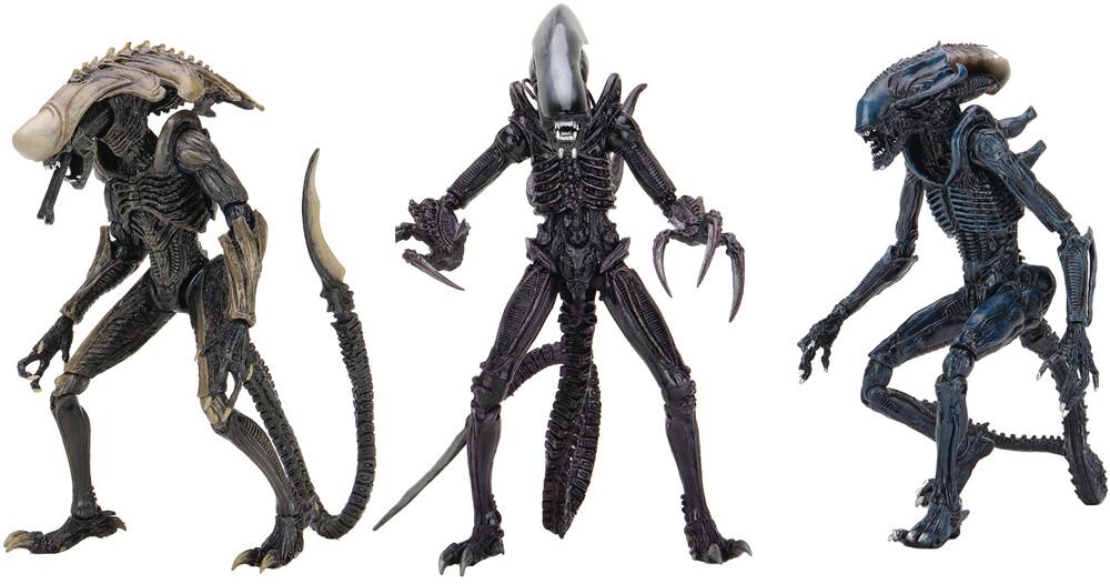 - Alien Vs Predator Movie Deco Alien 7in Af Asst