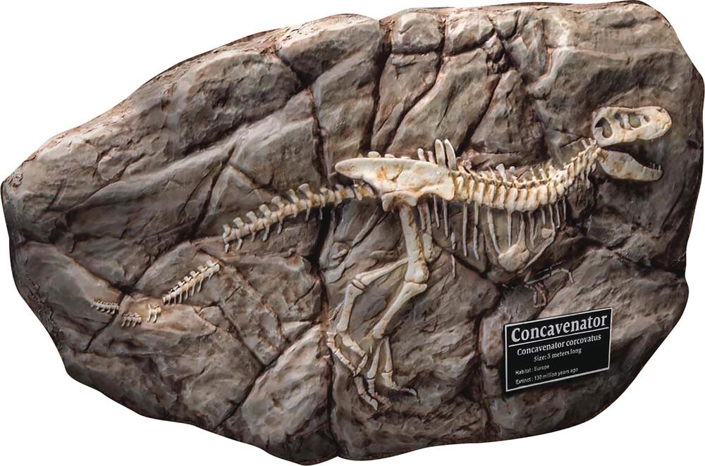 Star Ace Toys - Wonder Wild Ser Concavenator Fossil Replica (Net)