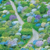 Fiddlehead - Between The Richness (White & Purple Vinyl) [Colored Vinyl]