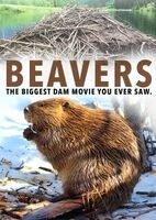 Beavers - Beavers
