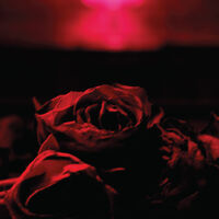 Paper Kites - Roses (Mod)