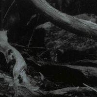 Barren Canyon - World Of Wounds (Uk)
