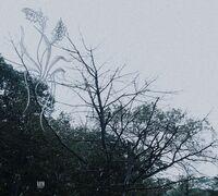Sadness - Rain