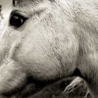 Bonny Light Horseman - Bonny Light Horseman [LP]
