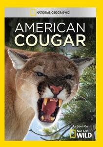 American Cougar