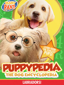 Puppy-pedia The Dog Encyclopedia: Labradors