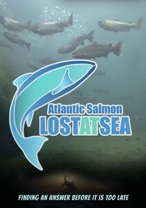Atlantic Salmon - Lost At Sea