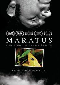 Maratus