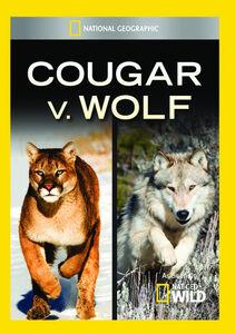 Cougar V Wolf