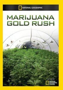 Marijuana Gold Rush