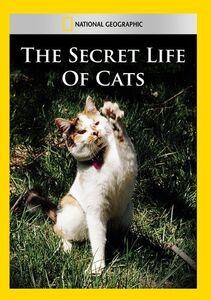 Secret Life of Cats
