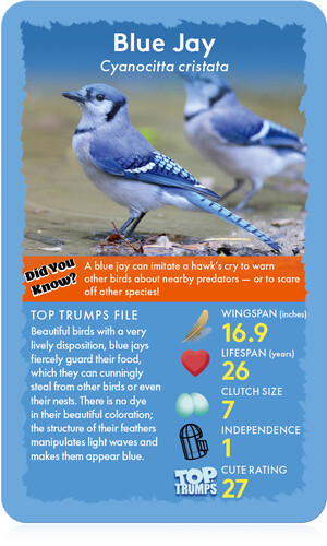 BIRDS TOP TRUMPS