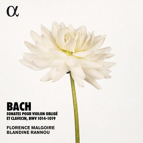 Sonates Violon Oblige