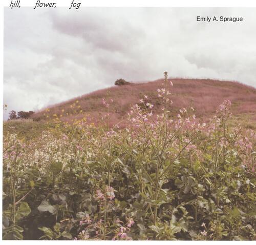Hill, Flower, Fog